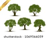 collection beautiful tree... | Shutterstock .eps vector #1069566059