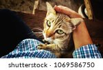 Stock photo the cute cat is pushing his master to hug 1069586750