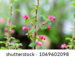Flowering Branch  Tree With...