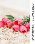 bouquet of big beautiful pink...   Shutterstock . vector #1069611020