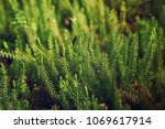 abstract natural background... | Shutterstock . vector #1069617914