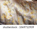 Yellow fungus on dry leaf...