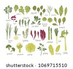 collection of green plants.... | Shutterstock .eps vector #1069715510