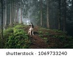 dog sits in a mystical forest.... | Shutterstock . vector #1069733240