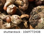inside of a composting container | Shutterstock . vector #1069772438