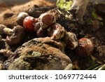 inside of a composting container | Shutterstock . vector #1069772444