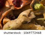 inside of a composting container | Shutterstock . vector #1069772468