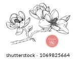 hand drawings magnolia flowers. ... | Shutterstock .eps vector #1069825664