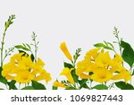 yellow flowers isolated on... | Shutterstock . vector #1069827443