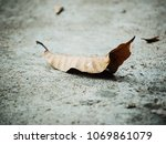 fall leaf on the ground. | Shutterstock . vector #1069861079