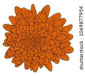 beautiful color sketch  dahlia... | Shutterstock .eps vector #1069877954