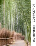 bamboo forest in kyoto japan | Shutterstock . vector #1069927409