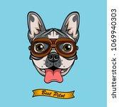 boxer dog face avator glasses.... | Shutterstock . vector #1069940303