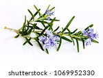 A Rosemary Herb With Flowers...