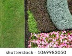 vareity of plants in a... | Shutterstock . vector #1069983050