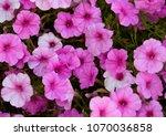 full frame of various shades of ... | Shutterstock . vector #1070036858