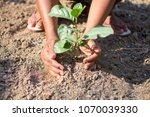 hand holding plant with nature... | Shutterstock . vector #1070039330