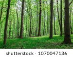 green deciduous forest in the... | Shutterstock . vector #1070047136