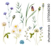 watercolor floral set  meadow... | Shutterstock . vector #1070068280