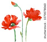red poppies flowers with green... | Shutterstock . vector #1070078060