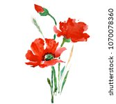 red poppies flowers with green... | Shutterstock . vector #1070078360