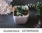 botanical nature background... | Shutterstock . vector #1070090420