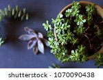 botanical nature background... | Shutterstock . vector #1070090438