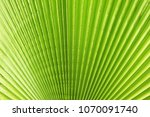Small photo of Cropped macro shot of green sugar palm tree leaf strip in sun light. Stripped European fan palm leaves texture in sunshine, exotic plant. Close up, copy space for text, floral background.