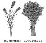 bunch of lavender illustration  ... | Shutterstock .eps vector #1070146133