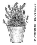 lavender in pot illustration ...   Shutterstock .eps vector #1070146139