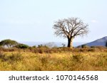 Small photo of Baobab in african country