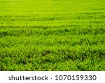 green agricultural field | Shutterstock . vector #1070159330