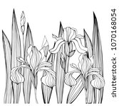hand drawn iris flowers.vector... | Shutterstock .eps vector #1070168054