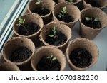 the vegetable garden. eco.... | Shutterstock . vector #1070182250