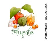 Physalis. For Labels  Banners ...