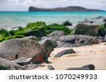 galapagos islands christmas... | Shutterstock . vector #1070249933