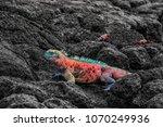 christmas iguana on espanola... | Shutterstock . vector #1070249936