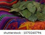 green cocoa leaves for energy... | Shutterstock . vector #1070260796
