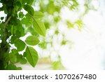 closeup nature view of green...   Shutterstock . vector #1070267480