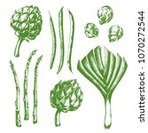 hand drawn fresh green leek ...   Shutterstock .eps vector #1070272544