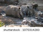 Rhinos Taking A Mud Bath