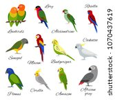 colorful collection of parrot... | Shutterstock .eps vector #1070437619