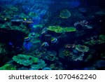 fish at aquarium  under water ... | Shutterstock . vector #1070462240