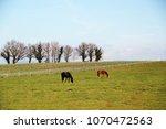 french roadside spring... | Shutterstock . vector #1070472563