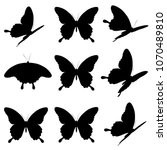 black butterfly  isolated on a...   Shutterstock . vector #1070489810