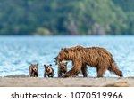 mother bear fishing for her... | Shutterstock . vector #1070519966