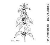 nettle  ink drawing medicinal... | Shutterstock .eps vector #1070520869
