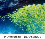 a large flock of tropical... | Shutterstock . vector #1070528039