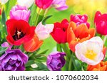 bouquet of beautiful multicolor ... | Shutterstock . vector #1070602034