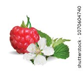 fresh  nutritious and tasty... | Shutterstock .eps vector #1070604740